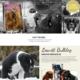 Hunde opdrætter wordpress hjemmeside